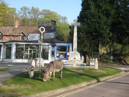 Burley Centre with donkeys
